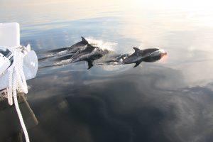 salidas avistamiento de delfines marbella